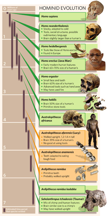 Hominids during the last 7 million years