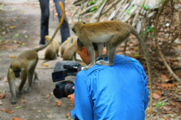My Assistant Director of Photography is really a pain in the neck! (Photo taken in Gambia)