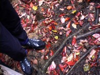 Cartwheel's feet admiring the wet multicolored leaves in the Great Smokey National Park.