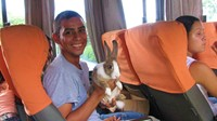 Bunny on the bus