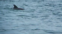 Dolphin saying hi in Bocas del Toro, Panama