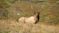 This beautiful bull elk was in the San Juan Mountains of Colorado.