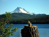 Squirrel enjoying the view of Mt. Jefferson and Ollalie Lake.