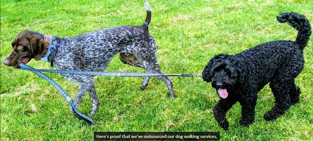 Why Rover Is Better Than Wag For Both Dog Owners and Sitters